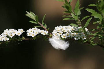 White Feather: What Now?