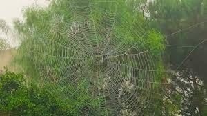 """""""A Noiseless Patient Spider,"""" Walt Whitman"""