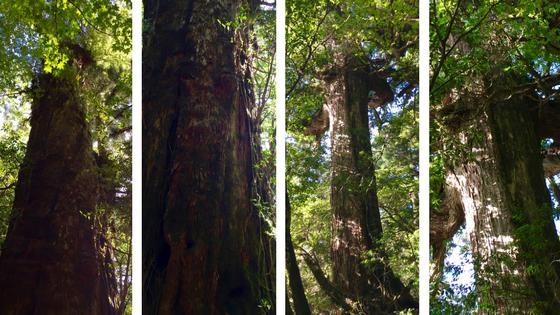 Masculine and Feminine Trees