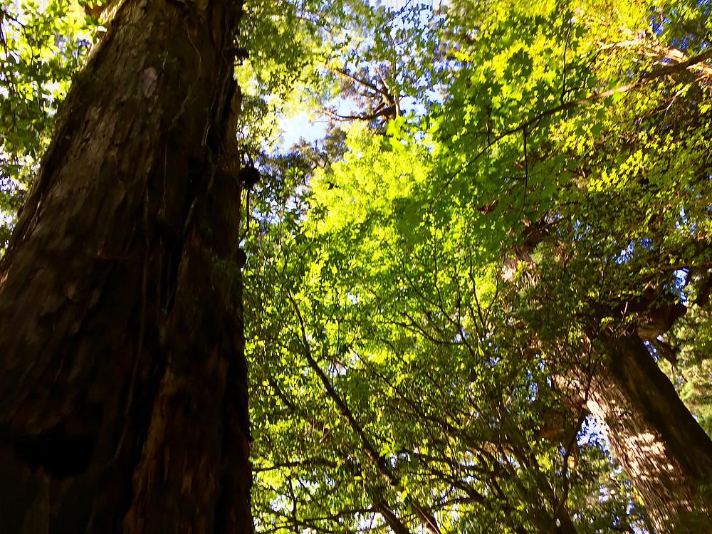 The 1 1 Doorway Trees