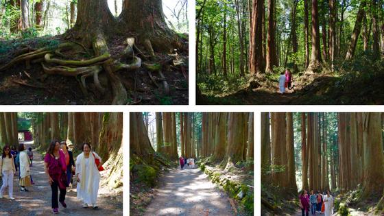 Togakushi Sugi Cedars