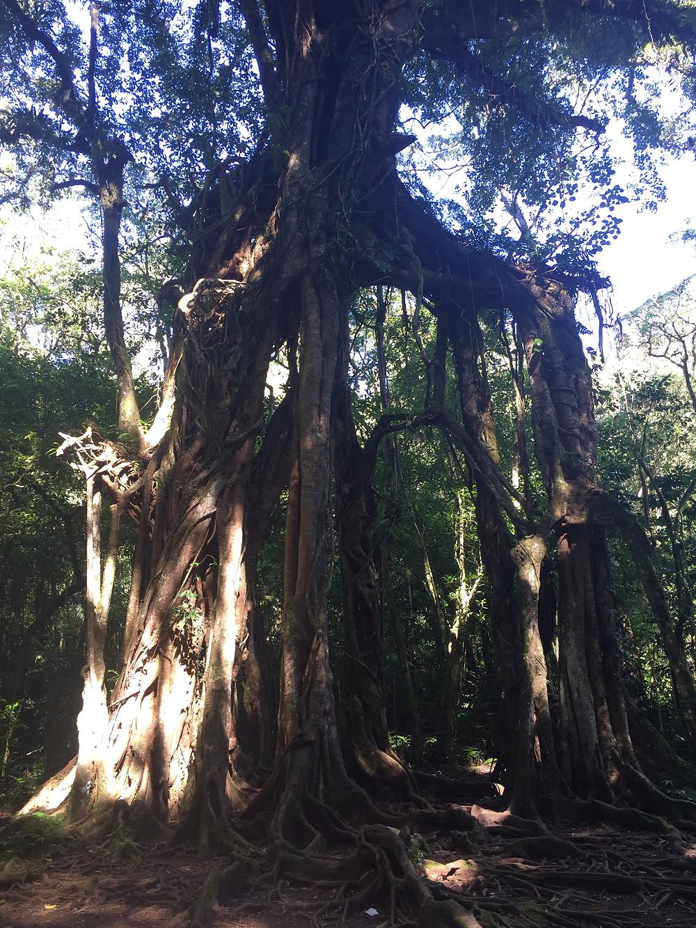 Soul Tree, Bali