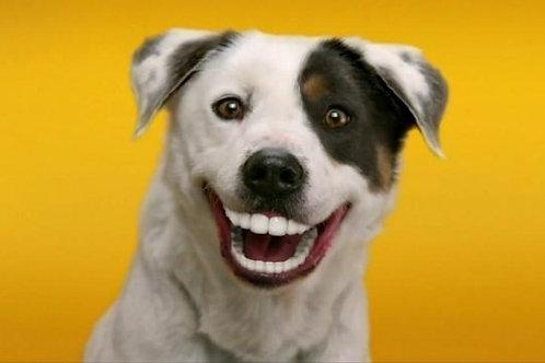"2-3 Dogs ""Bi-Weekly Service"""
