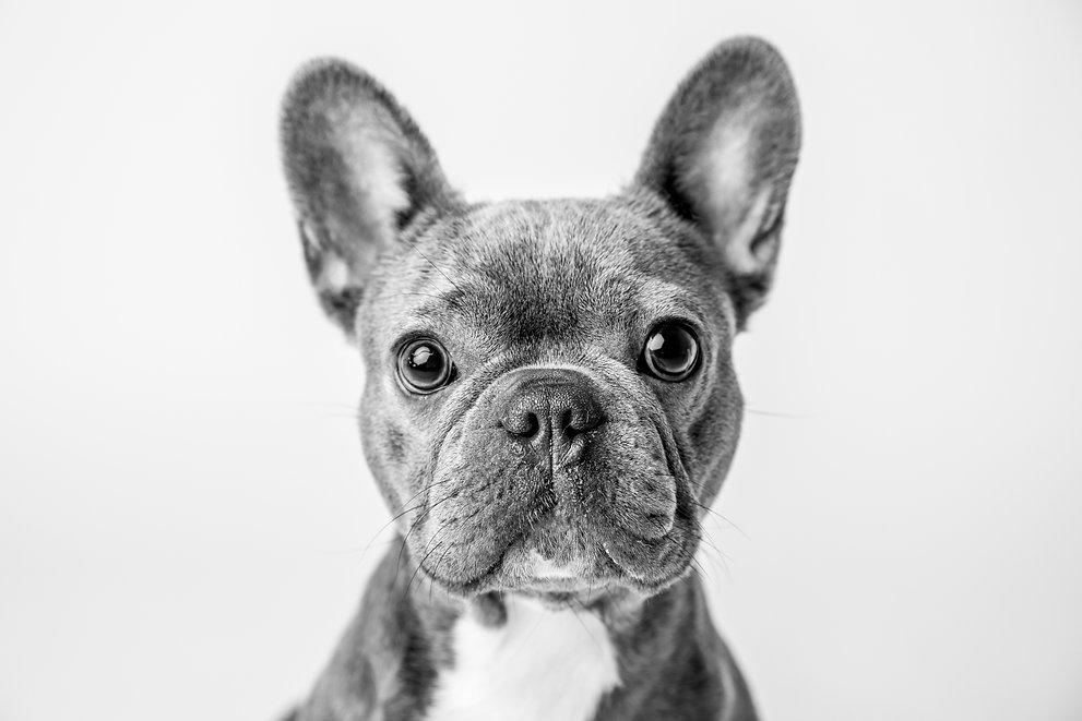 huisdierenfotograaf.jpg