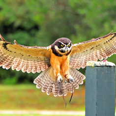 birds of prey...jpg