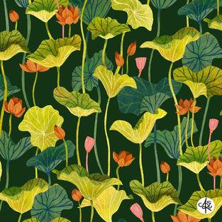 Lotus by Amelia Eaton