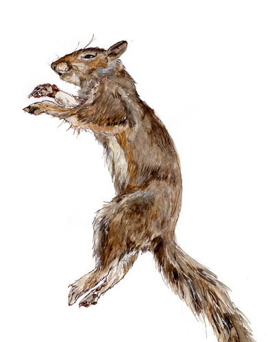 Study of a squirrel