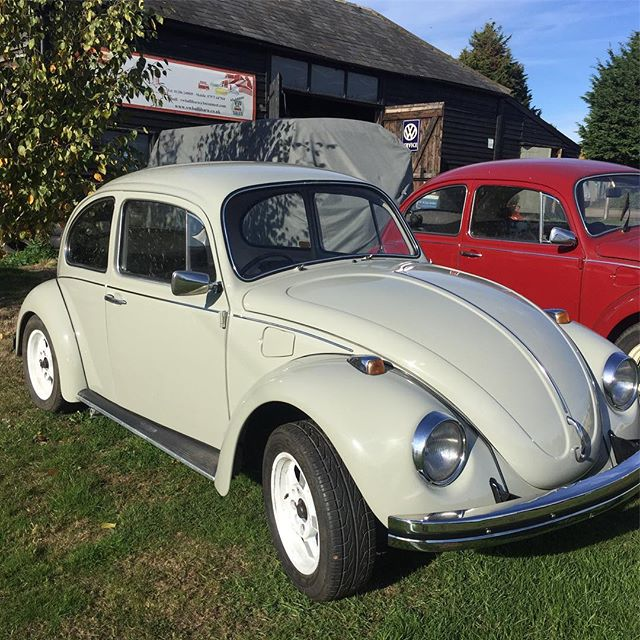 Beautiful bug #vwbeetle #vwbullibarn