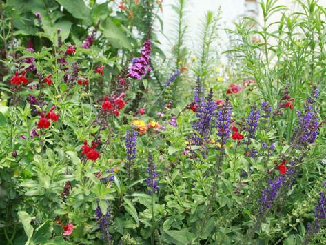 Un jardín para polinizadores