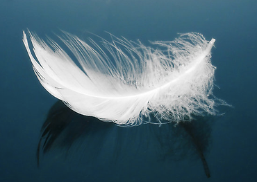 angel-feather.png