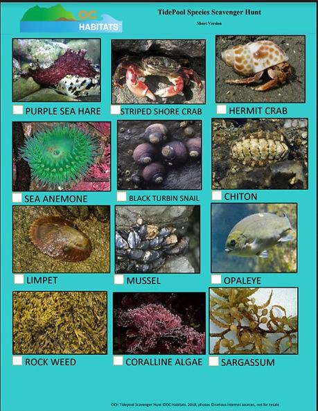 Tide Pool Scavenger Hunt page 1 jpeg.jpg