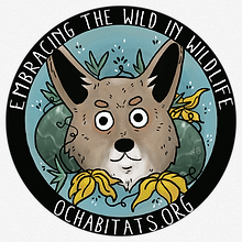 OCH Cyote Sticker.png