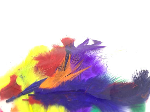 Decorative Colourfull Feathers ( Art & Craft )