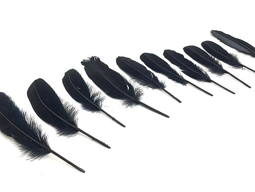Decorative Black Feathers (10 pcs ) (7 inch ) ( For Art & Craft )