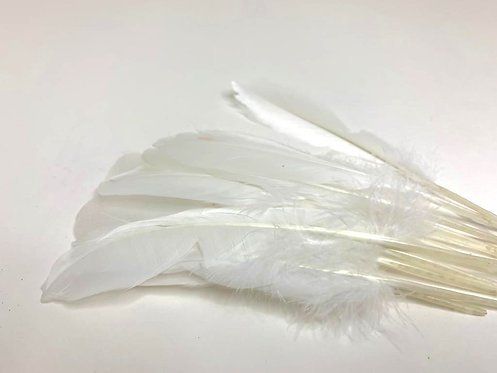 Decorative White Feathers (10 pcs ) (For Art and Craft)