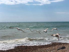Brighton Beach UK.jpg