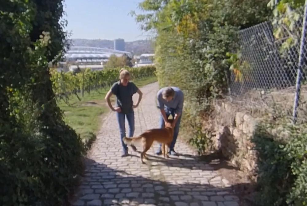 Hund mit Frau und Mann im Weinberg