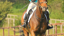 Tying Up in Horses: Part 1 - Symptoms and Causes