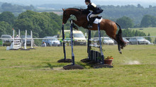 Tying Up in Horses: Part 2 - Management of the condition