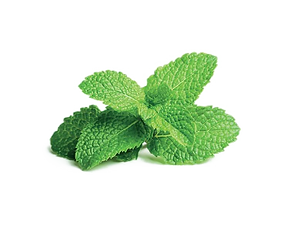 Mint-PNG-Free-File-Download.png