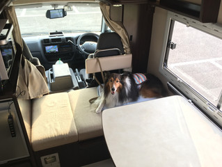 愛犬との旅!真夏の静岡へ