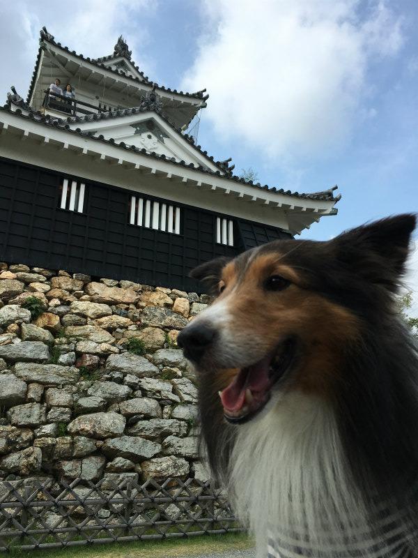 レンタルキャンピングカー浜松城