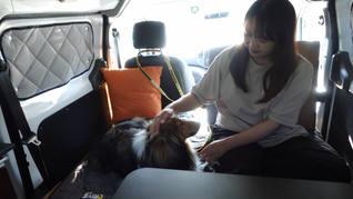 車内で愛犬とゆっくり過ごせます