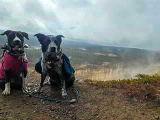 Hikes with mom go from PAWTASTIC to just.. Pawsome..