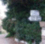 Camino de Nietzsche, Eze, Riviera francesa, Francia