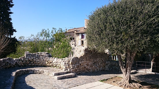 Olive tree in stone patio, St. Paul de Vence, France