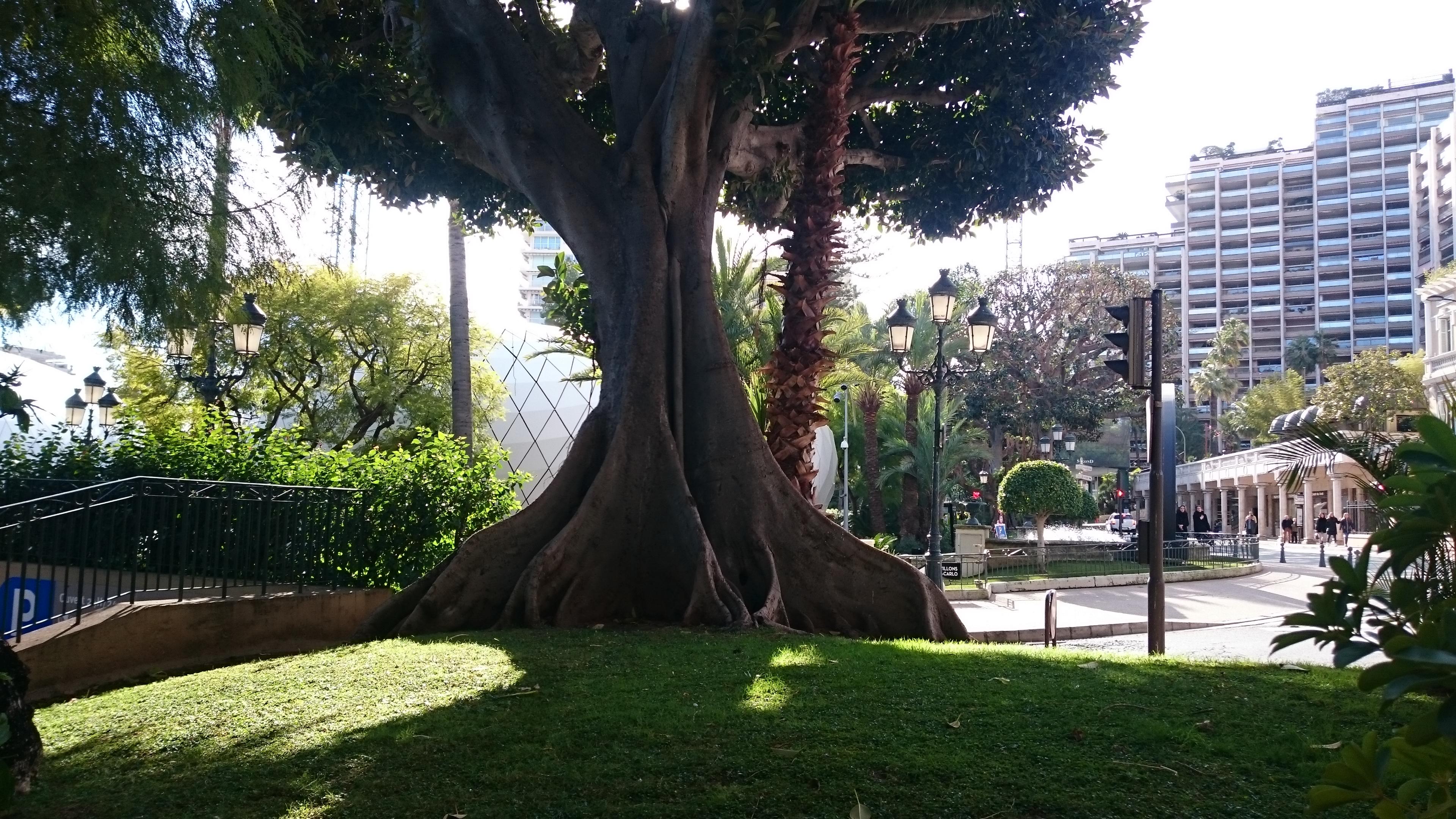 Jardines de Monte-Carlo