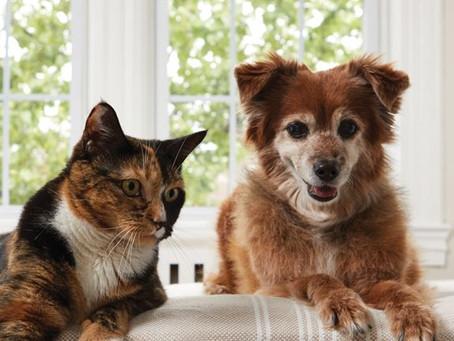 Suikerziekte bij hond en kat.