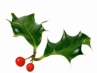 Popular holiday plants may be poisonous or toxic, especially to children and pets.