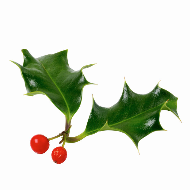 Happy Holly Day!