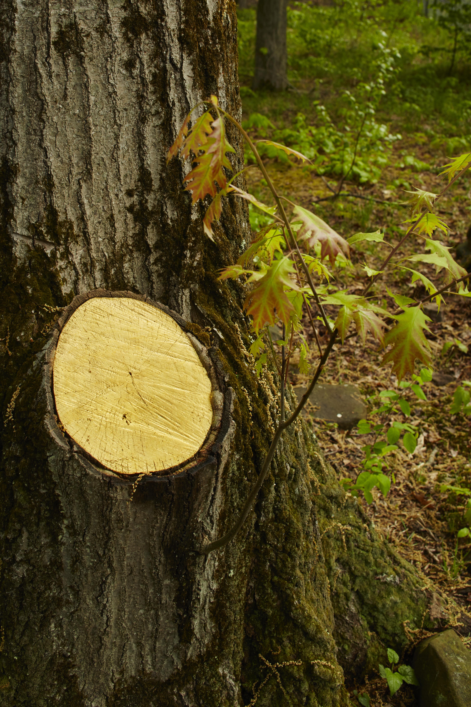 RESTORE II, detail tree stump