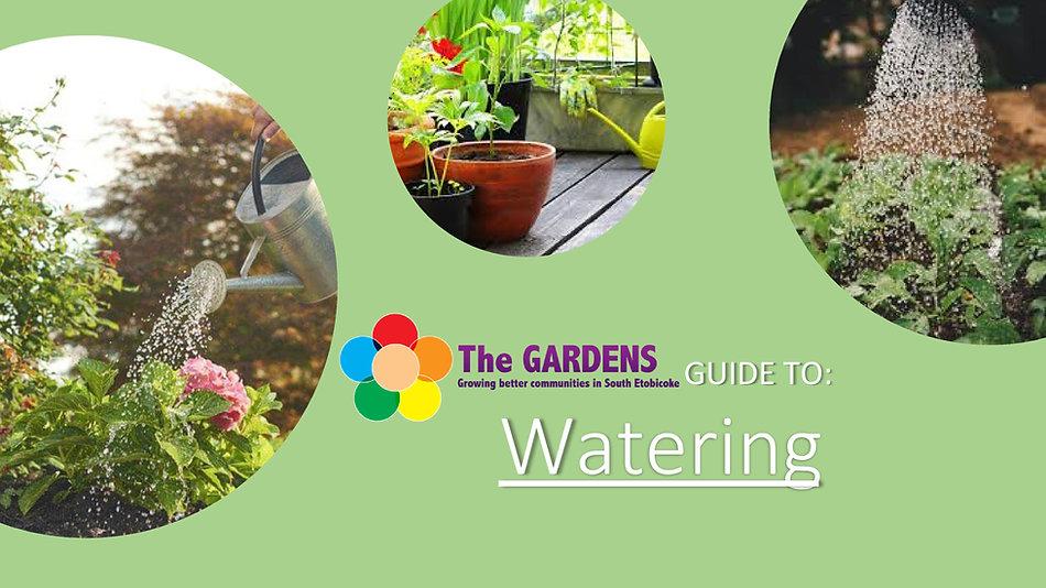 Watering-0.jpg