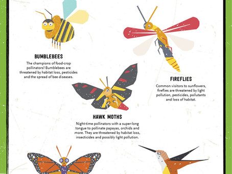 How to Attract Pollinators