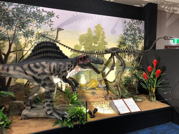 Spinosaurus Display