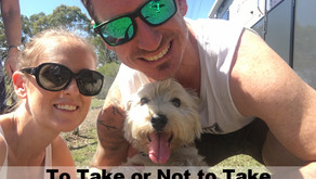 Whether or not to take our dog travelling around Australia