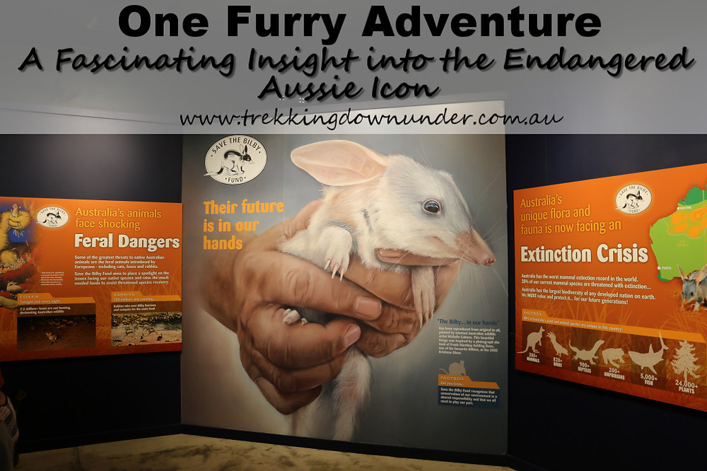 the Bilby experince