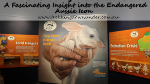 The Must See Bilby Experience Attraction | Charleville | QLD