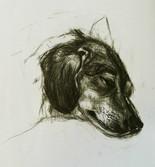Portrait of a sleeping dog  Charcoal on sketchbookpaper