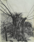 Golden willow tree alongside a ditch  Charcoal on green colored paper  March 2018