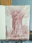Golden willow alongside a ditch  Red penicl on sketchbookpaper