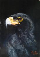 Portret van een zwarte arend   Portrait of a black eagle  Acryl op paneel Acrylic on panel   23 februari 2012 23rd of February 2012
