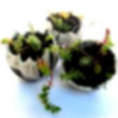 Home_raku_plant_balls.jpg