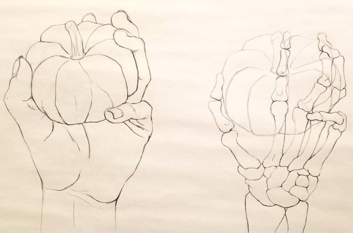 Study of Hand and Wrist
