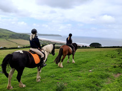 FACEBOOK Horses