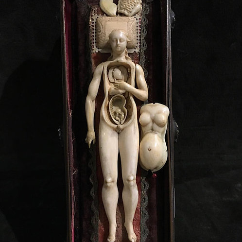 Anatomical model of a pregnant woman