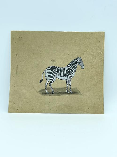 Four enhanced drawings from aYak , Zebra , Giraffe .